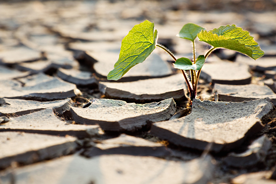 Resultado de imagen para cultivos tolerantes sequia hojas