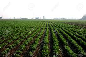 6aea2e31ab50d España ha perdido en los últimos años más de veinte mil explotaciones  agrícolas