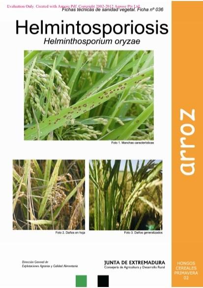 Helminthosporium oryzae arroz - Papaveris helminthosporium